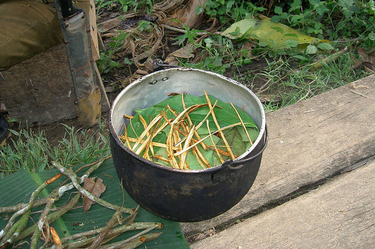 ayahuasca-hoe-doe-je-dat