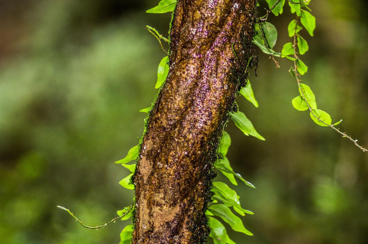 ayahuasca-levenslessen-van-de-eerste-keer