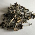 paddos-truffels-veelgestelde-vragen-f-a-q