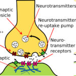 Hersencellen-figuur-2