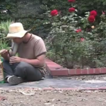 Salvia-tuin-youtube